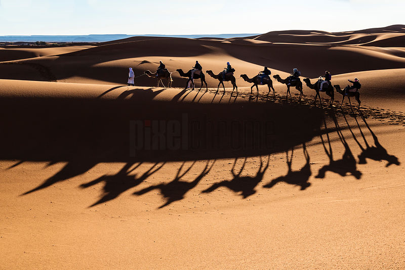 Tourists Riding Camels in the Dunes