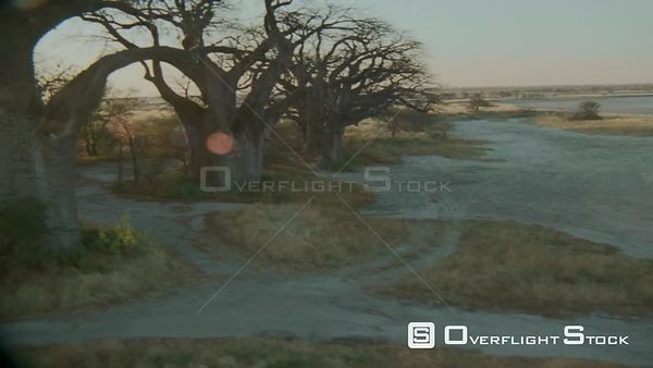 Aerial wide angle shot across salt pan to group of baobab trees on edge, over tops of trees to vast grass plains beyond Botswana