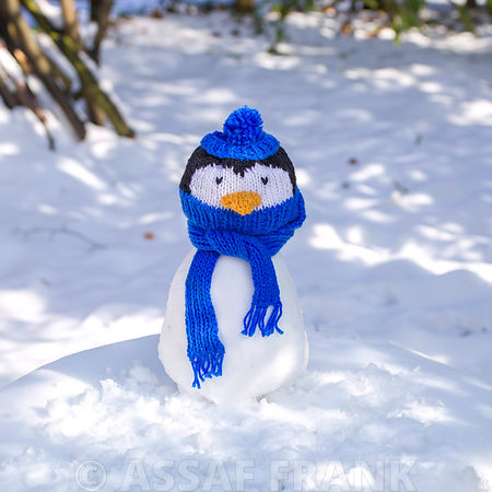 Penguin with wooly scarf and hat on snow