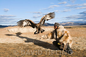 Dalai Han an Kazakh eagle hunter with his Golden Eagle Bayan-Ulgii in Altai Mountains western Mongolia