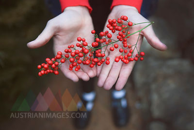 Wild berries in hands