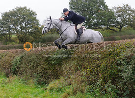 Dave Mee jumping a big hedge - Quorn at Barrowcliffe 1-11-13