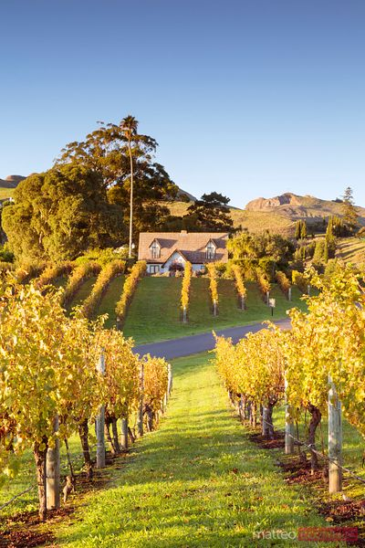 Black barn winery in autumn, Hawke's bay, New Zealand