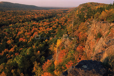 Looking out over Maple forest canopy in autumn colours, Michigan, USA