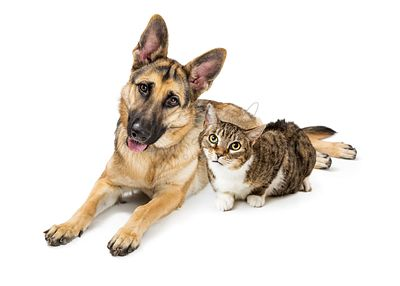 Large Dog and Cat Lying Together Over White