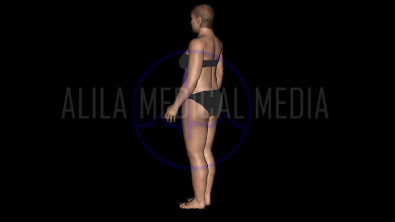 With ALPHA. Slimming animation with 3D model