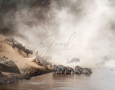 Zebra and Wildebeest Migration in Africa
