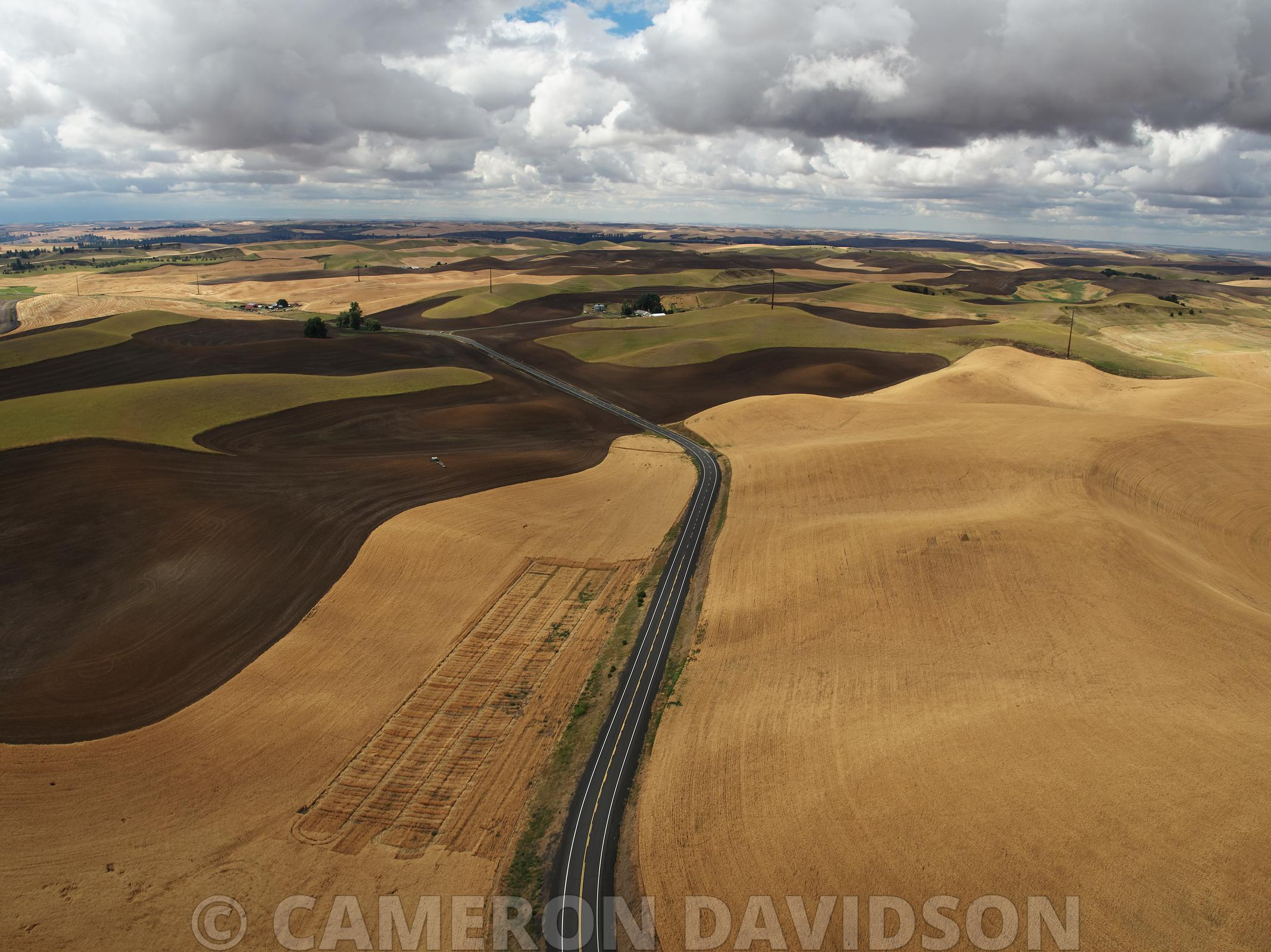 Palouse Hills Wheat harvest