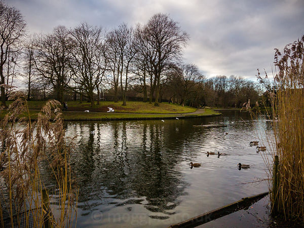 Greenbank Park Lake