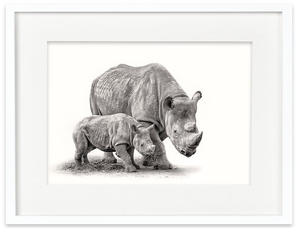 Rhinoceros and Calf | Africa on White