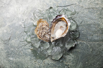 Heart shape Oyster on stone plate background with ice