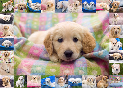 Collage of cute puppies