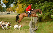 Simon Hunter and the Fitzwilliam hounds jumping a fence near The Kennels.
