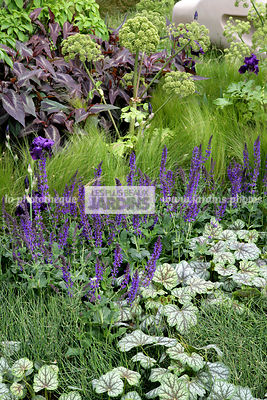 Massif, Style rustique, Couvre-sol, Heuchera 'Green Spice' (heuchère), Alum root, Coral bells, Salvia nemorosa 'May Night' (sauge bleue), Garden sage, Meadow sage, Nassella tenuissima (cheveu d'ange), Stipa tenuissima, Stipa tenuifolia, Mexican feather gr