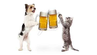 Dog and Cat Celebrating With Beer Cheer