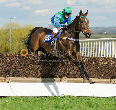 The Atherstone  Point-to-point at Clifton-upon-Dunsmore 17/4