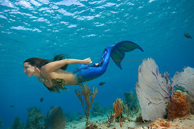 Mermaid swimming over shallow sandy bottom off west side of Cozumel, Mexico.