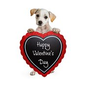 Puppy Carrying Valentines Day Message