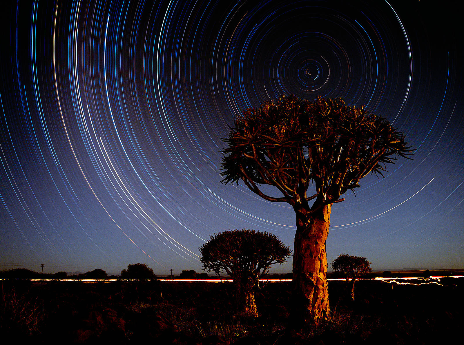 Quiver Tree and Star Trail