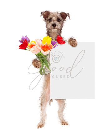 Dog Holding Tulips and Blank Sign