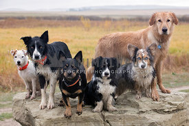A group of dirt, wet dogs standing on a rock.