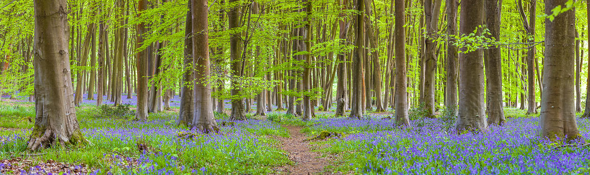 Pathway through Trees in forest in Hampshire