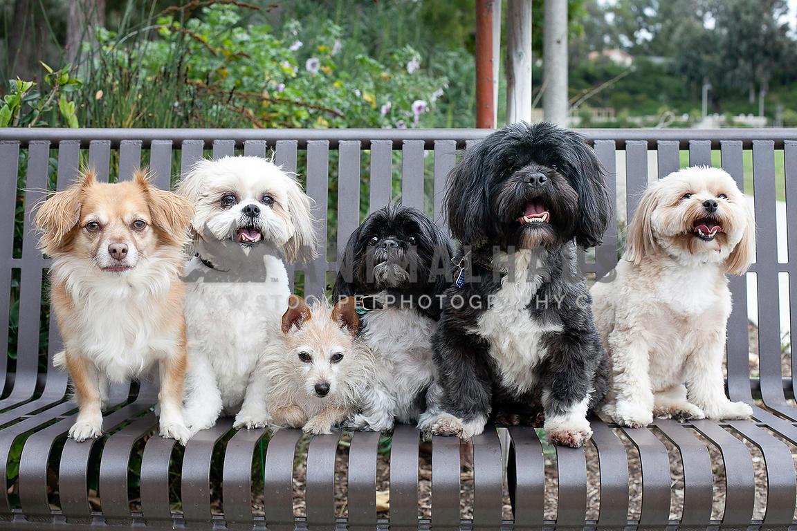 Incredible Animalhaus Media 6 Small Dogs On A Bench At The Park Frankydiablos Diy Chair Ideas Frankydiabloscom