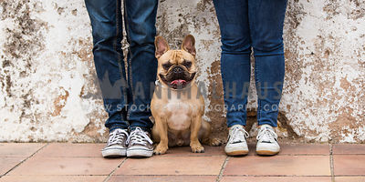 french bulldog sitting between owners legs