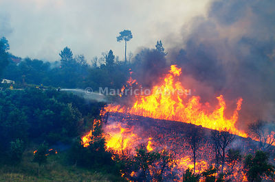 A forest fire in the Arrábida Natural Park. Palmela, Portugal