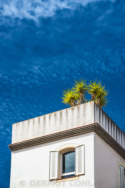 PLANTS ON ROOFTOP, SEVILLE, SPAIN