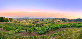 After the sunset, panorama of vineyards of Beaujolais, France