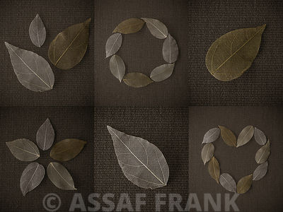Collage of Dried Leaves