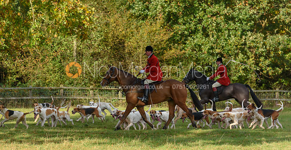 Huntsman and hounds - Fitzwilliam Hunt Opening Meet 2016