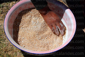 A woman mixes quinoa grains with pokera (to help separate the shell from the grain), Potosi Department, Bolivia