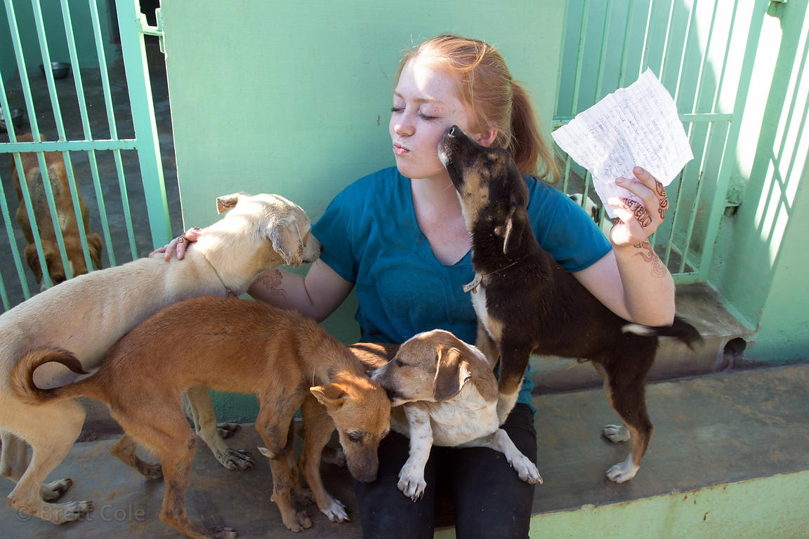 A volunteer pets puppies at the Tree of Life for Animals rescue center (tolfa.org.uk) near Pushkar, Rajasthan, India