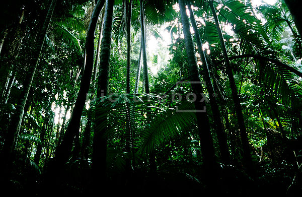 An atmospheric background image of a rain forest or jungle.