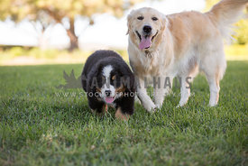 puppy and large dog standing in the grass