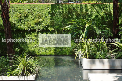 Aquatic garden, Exotic garden, Tropical garden, Water garden, Foliage wall, Green wall, Vegetation wall