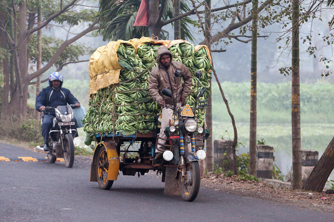 Hauling cauliflower by tricycle near Bantala, Kolkata, India.