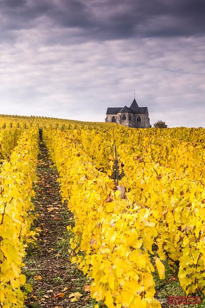 Church and vineyards, Chavot Courcourt, Champagne, France