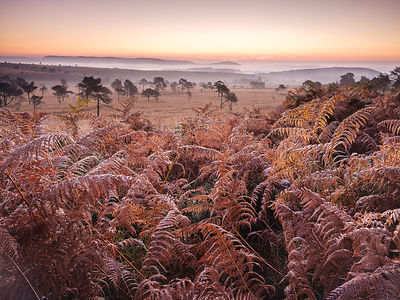Looking over bracken towards distant mist on the heathland of Woodbury Common, near Exmouth, Devon, UK