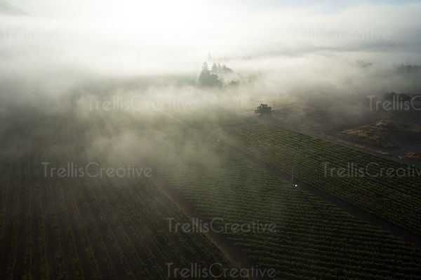 add to stock, agriculture, California, Calistoga, fog, foggy morning, landscape, misty morning, Napa Valley, rolling hills, s...