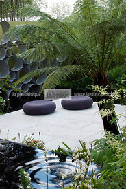 Contemporary garden, Digital, Tree Fern, Tropical garden, Contemporary Terrace