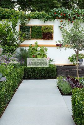 Buxus, garden designer, Mini potager, Mini Vegetable garden, Olive tree, Small garden, Tropaeolum majus, Urban garden, Common Box, Foliage wall, Green wall, Vegetation wall, Wall decoration