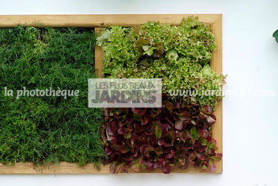garden designer, Mini potager, Mini Vegetable garden, Salad, Foliage wall, Green wall, Vegetation wall, Wall decoration