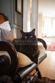 Black Cat on a chair