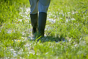 Person in Wellington boots walking over wet grass, River Test, Hampshire, England