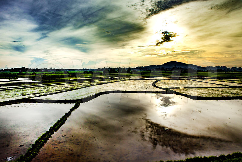 _W_P0271-Vietnam-man-rice-field-at-morning_1