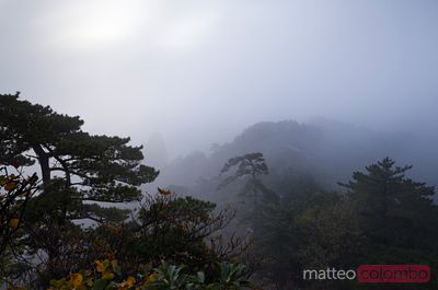 Huangshan mountains in the fog, China