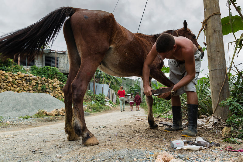 Man Preparing to put a New Shoe on a Horse